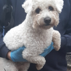 Found dog on 16 Nov 2020 in tallaght. found, now in the dublin dog pound...Date Found: