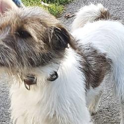 Found dog on 16 Oct 2018 in Rathfarnham.. found DSPCA Page Liked · 22 hrs · Edited ·    Female terrier cross found 11/10/18 in Rathfarnham.