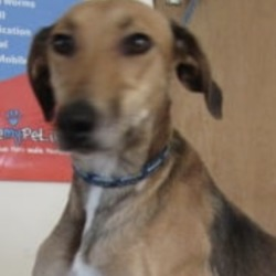 Found dog on 16 Sep 2019 in Brittas Bay.. found...Wicklow Dog Pound