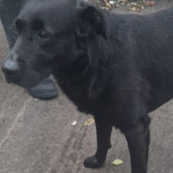 Found dog on 17 Aug 2020 in Tallaght. found, now in the dublin dog pound.,..Date Found: 15/08/2020 Location Found: Tallaght