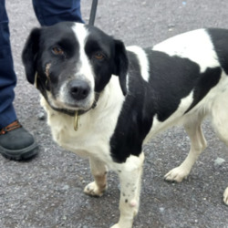 Found dog on 17 Aug 2021 in Carlanstown Meath. found....Meath Dog Shelter utYSiessetnnhpeonnrdafsymm matSolt em4:17r PgeSdMuc  ·  Stray ref 111 Found Carlanstown Meath. Collar no tag. Not chipped.  Proof of ownership and fee required to reclaim  Phone 0870973911 10am to 3pm Mon to Sat.