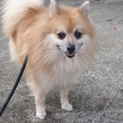 Found dog on 17 Dec 2019 in clonee. found..Meath Dog Shelter December 13 at 4:12 PM ·  😁🐕booked to rescue if not reclaimed😊🐶  This little chap was picked up in Clonee yesterday, any information please contact 0870973911 Proof of ownership ans reclaim fee apply