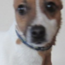 Found dog on 17 Jan 2020 in Roundwood. found...Wicklow Dog Pound