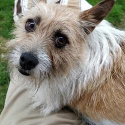 Found dog on 17 Jul 2018 in Kells . Terrier found around Kells/Oristown Co. Meath