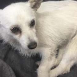 Found dog on 17 Jul 2019 in blanchardstown . found...TU Dublin - Blanchardstown Campus. July 15 at 8:53 AM · Dublin This little pet was found on the grounds in TU Dublin blanchardstown , he had been trapped all night with wire wrapped around his paw. He is in good shape though but very scared, in the loving care of our caretakers for now can everyone please share , he is a beauty