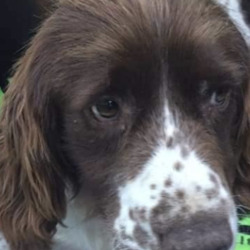 Found dog on 17 Jul 2020 in limerick. found...AthenryLike Page