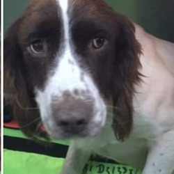 Found dog on 17 Jul 2020 in limerick_. found..AthenryLike Page