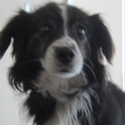 Reunited dog 17 Jun 2020 in wicklow. UPDATE REUNITED....found...Wicklow Dog Pound 1 hr ·  Soxy is a male crossbreed found in Newcastle, Co. Wicklow. For further information please contact Wicklow Dog Pound on 0404 44783. Thank you