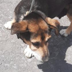 Found dog on 17 Jun 2021 in Liffey Valley. found, now in the dublin dog pound...Date Found: 15/06/2021 Location Found: Liffey Valley
