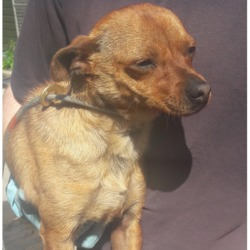 Found dog on 17 May 2018 in Fonthill Bus,Park. found, now in the dublin dog pound...Date Found: 16/05/2018 Location Found: Fonthill Bus,Park
