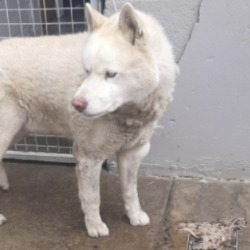Found dog on 17 May 2021 in Tallaght. found, now in the dublin dog pound..Date Found: 14/05/2021 Location Found: Tallaght