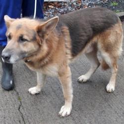 Reunited dog 17 Nov 2017 in Baldonnell , Baldonnell. UPDATE REUNITED...found, now in the dublin dog pound.. Date Found: Wednesday, November 15, 2017 Location Found: Baldonnell , Baldonnell