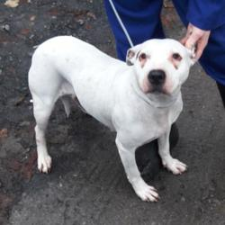 Reunited dog 17 Nov 2017 in Glenmaroon Park , Palmerstown. UPDATE REUNITED...found, now in the dublin dog pound... Date Found: Wednesday, November 15, 2017 Location Found: Glenmaroon Park , Palmerstown