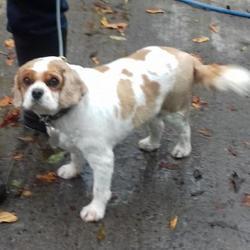 Reunited dog 17 Oct 2017 in Ronanstown , Clondalkin. UPDATE OWNER FOUND...found,now in the dublin dog pound... Date Found: Friday, October 13, 2017 Location Found: Ronanstown , Clondalkin