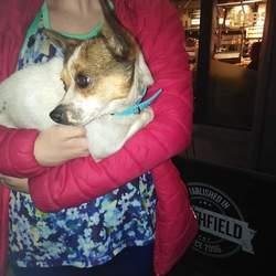 Found dog on 17 Oct 2018 in Queen Street, Dublin 1. Jack Russell found on Queen Street, Dublin 7