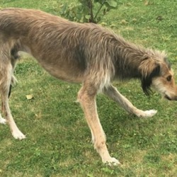 Found dog on 17 Sep 2019 in kilkenny. found.. Paw Pals Rescues. 3 mins ·  Does anyone know who owns this poor emaciated dog ?! Hanging around McDonalds in Kilkenny. He's underweight, rooting in bins for food. He's very nervous so we haven't been able to get near him. All we could do is give him food and water