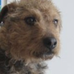 Found dog on 18 Apr 2019 in wicklow. found..Wicklow Dog Pound