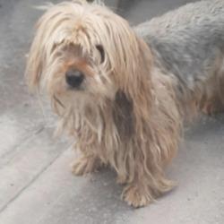Found dog on 18 Aug 2021 in Tallaght. found, now in the dublin dog pound...Date Found: 13/08/2021 Location Found: Tallaght