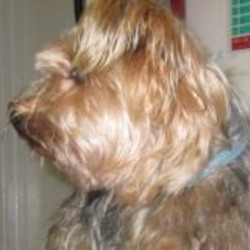 Reunited dog 18 Dec 2018 in Wicklow town.. UPDATE REUNITED....found...Wicklow Dog Pound
