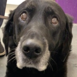 Found dog on 18 Dec 2019 in sallins. found...Moss Veterinary HospitalLike Page 35 mins ·  **Stray found** Stray found today in Sallins Co.kildare. Male not neutered, is chipped but not registered to any registered data base. Is very nervous. If anyone recognises him please contact we are keen to find the owner.