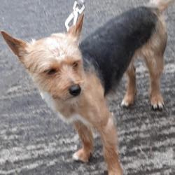 Found dog on 18 Feb 2020 in Ronanstown. found, now in the dublin dog pound...Date Found: 13/02/2020 Location Found: Ronanstown