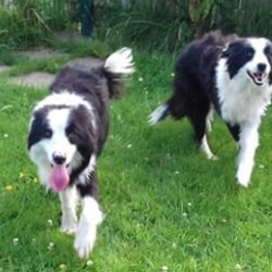 Found dog on 18 Jul 2019 in slane. found...Meath Dog Shelter 1 hr ·  Ref 202 + 203 Found near Grangegeeth, Slane Both dogs are extremely underweight and in bad condition, however both are very friendly, good with other dogs and good with the finders cat, we would really like to find the owners of these dogs, please contact us on 0870973911 or pm the page with any information