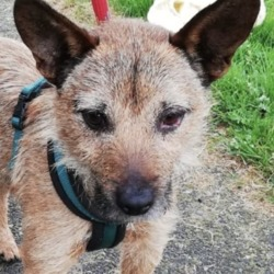 Found dog on 18 Jul 2019 in tallaght. found...DSPCA Page Liked · 11 mins · Edited ·    Male adult terrier found 15/07/19 in Tallaght D24.