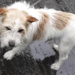 Found dog on 18 Jun 2019 in clondalkin Village. found, now in the dublin dog pound...Date Found: 13/06/2019 Location Found: Village