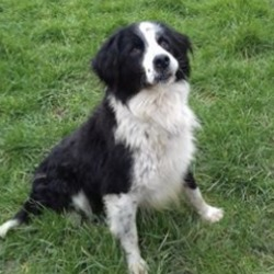 Reunited dog 18 Mar 2020 in drogheda. UPDATE RECLAIMED .....found...Meath Dog Shelter March 16 at 12:40 PM ·  Ref 52 stray  Found in Drogheda retail park, not chipped, no collar or tag, proof of ownership and reclaim fee apply.  If not reclaimed he will be avaible for rehoming from the 21/3/20, rehoming fee and home check apply  Contact 0870973911
