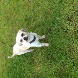 Found dog on 18 May 2018 in Found Finglas now based in Swords. XxxxxOwner Found xxxxxxxSmall Terrier Cross found this morning on N2 near Finglas.  Very Friendly. Collar.  Will be checking if chipped.