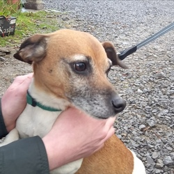 Found dog on 18 May 2021 in Duleek, Co. Meath. Male Jack Russel Terrier found 18/05/21 Duleek, Co. Meath. Neutered but not microchipped. Proof of ownership required. Contact 0860342343