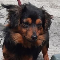 Found dog on 18 May 2021 in Weston Est. found, now in the dublin dog pound..Date Found: 17/05/2021 Location Found: Weston Est