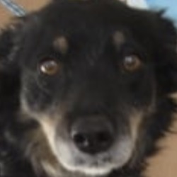 Reunited dog 18 Nov 2019 in delgany. UPDATE REUNITED..found..Wicklow Dog Pound