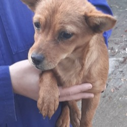 Found dog on 18 Oct 2019 in Saggart Citywest. found, now in the dublin dog pound..Date Found: