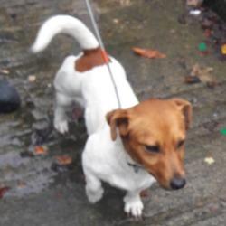 Found dog on 18 Sep 2018 in clondalkin. found, now in the dublin dog pound..Date Found: 14/09/2018 Location Found: Village