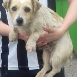 Found dog on 18 Sep 2018 in Palmerstown Village. found, now in the dublin dog pound...Date Found: 14/09/2018 Location Found: Palmerstown Village