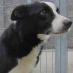 Found dog on 18 Sep 2018 in Roundwood ... found..is a male collie,  Both were found in Roundwood contact wicklow dog pound...