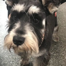 Found dog on 19 Apr 2019 in clonsilla. found..Village Vets Clonsilla