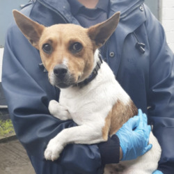 Found dog on 19 Aug 2020 in Tallaght.. found, now in the dublin dog pound..Date Found: 17/08/2020 Location Found: Tallaght