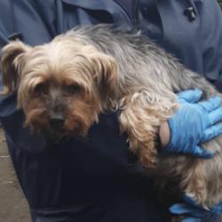 Found dog on 19 Aug 2020 in tallaght. found, now in the dublin dog pound..Date Found: 17/08/2020 Location Found: Tallaght