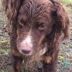 Found dog on 19 Aug 2020 in tipperary. found tipperary, contact mo chara animal rescue...Clondalkin Animal Aid 16m ·  FOUND TIPPERARY