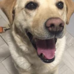 Found dog on 19 Jan 2019 in Rathfarnham. found...DSPCA Lost & Found Pets 5 hrs ·  Found on Mount Venus Rd Rathfarnham