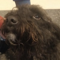 Found dog on 19 Jan 2019 in Terenure. found...This dog was hanging around Bushy Park in Terenure all day. Has no collar on him, and no microchip. We have taken him home for the night while we find his owners. ....DSPCA