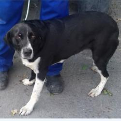 Found dog on 19 Jun 2018 in Birch View Heights. found, now in the dublin dog pound...Date Found: 14/06/2018 Location Found: Birch View Heights