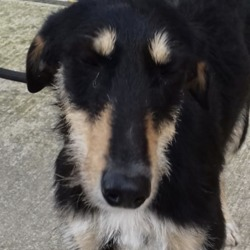 Found dog on 19 Mar 2019 in avoca Dunboyne. found...Meath Dog Shelter