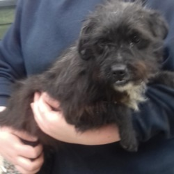 Found dog on 19 Mar 2019 in Springfield Tallaght. found, now in the dublin dog pound...Date Found: