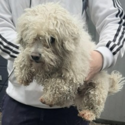 Found dog on 19 May 2020 in Saggart/Tallaght. found, now in the dublin dog pound,....Date Found: 19/05/2020 Location Found: Saggart/Tallaght