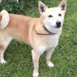 Reunited dog 19 May 2020 in trim. UPDATE REUNITED...found...Meath Dog Shelter 2 mins ·  This little dude was picked up on main street Trim. Reclaim fee and proof of ownership apply Contact 0870973911