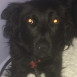 Found dog on 19 Nov 2018 in .Clondalkin . found..Clondalkin Animal Aid September 6 ·  I don't think an owner is going to come forward for this dog. It looks like she broke free from somewhere where she was tied up.  She's extremely nervous and unsure initially. She's not good with other dogs and very wary of people. But after spending some time with her she relaxed and was giving kisses. However, the slightest knock or noise will make her flinch and be on guard. We've called her Ebony.
