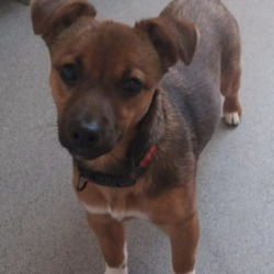 Found dog on 19 Nov 2018 in navan..... found..Paws A While 1 hr ·  *** FOUND *** This little pup was found today near Athlumney Abbey, microchip registered to breeder! Please contact us on 0469020500 if you recognise this pup! Proof of ownership will be required